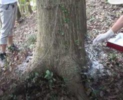 樹木葬と散骨